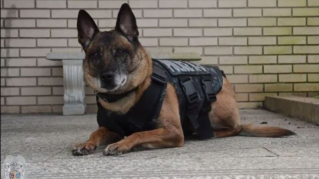 Retired K-9 officer Kobie (Source: Spartanburg Police Department Youtube)