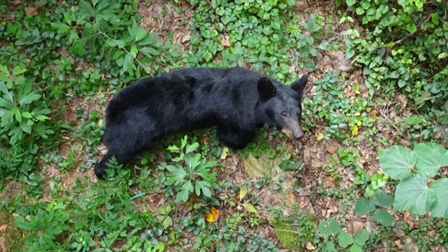 Upstate woman spots bear outside paris mountain home fox carolina 21 black bear outside paris mountain home source margaret thomas publicscrutiny Choice Image