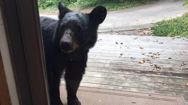 Bear approaches front door of Greenville Co. home (Aug. 30, 2017/FOX Carolina)
