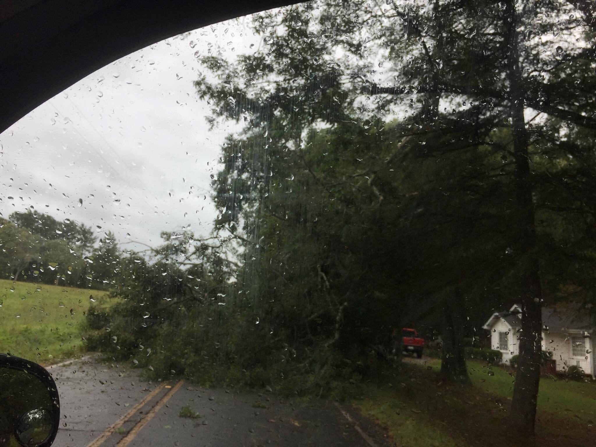 Tree in roadway in Liberty. (Source: eyewitness)