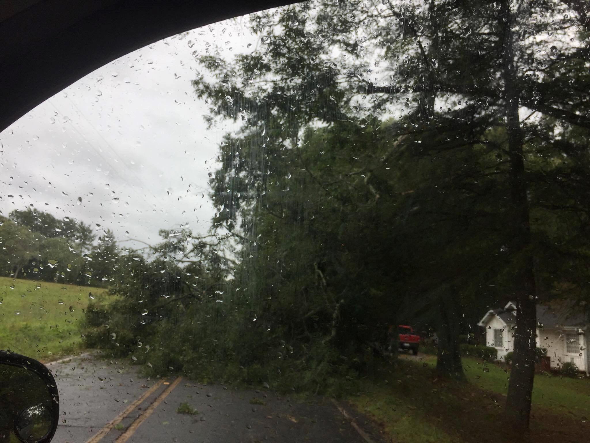 Tree in roadway in Liberty. (Source: eyewitness)