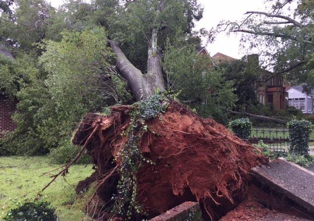 Tree on house on Earle Street (FOX Carolina/ Sep. 12, 2017)