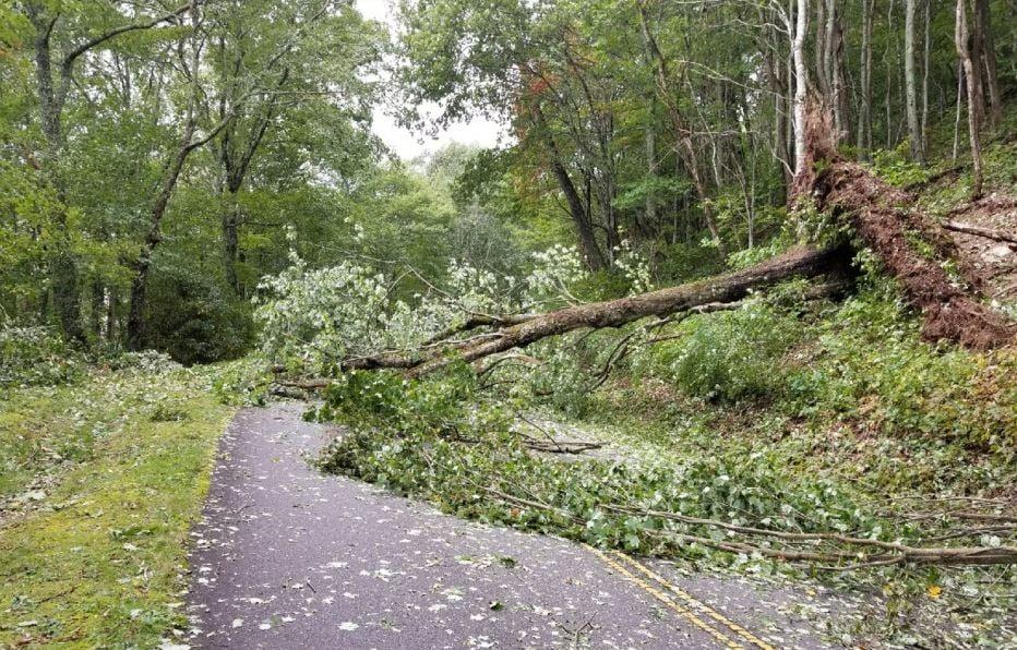 Tree down on Blue Ridge Parkway in September 2017 (Source: NPS)