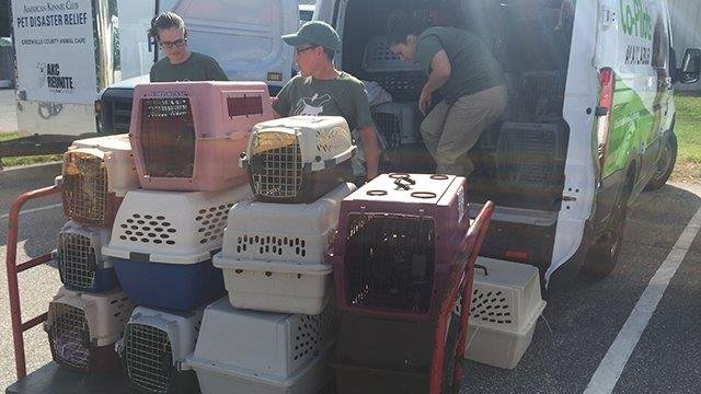 Animals arriving from Jacksonville, FL. (9/16/17 FOX Carolina)