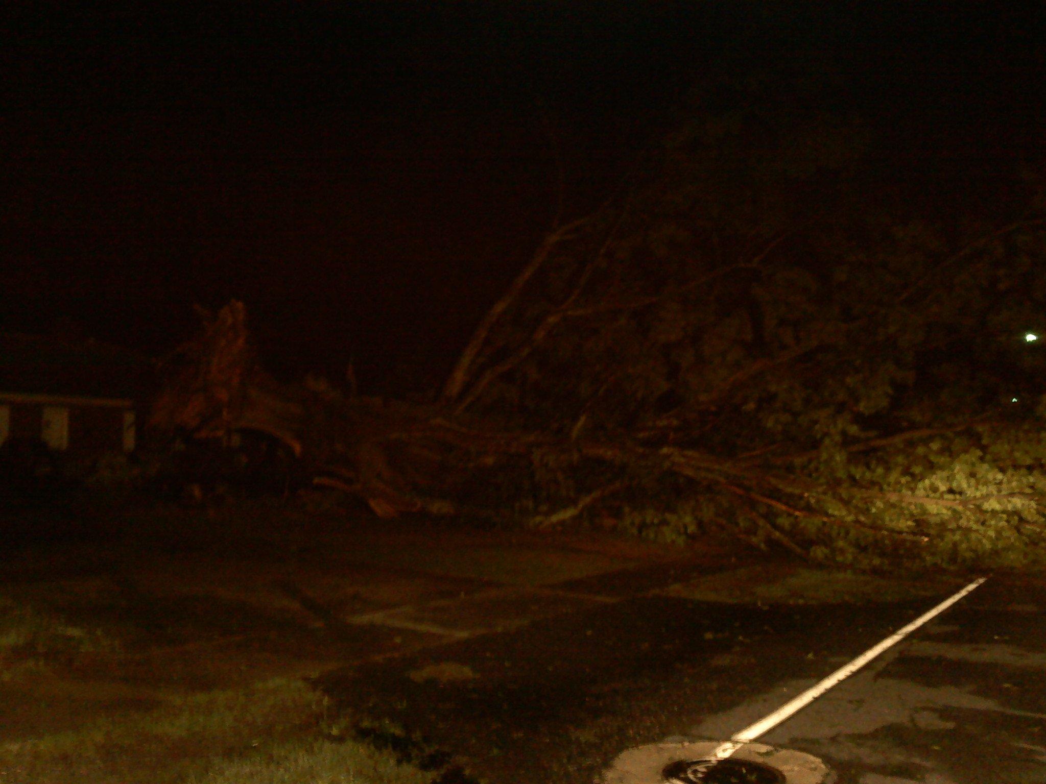 A tree fell on Blue Ridge Avenue in Belton. Photo by Mark Warren/FOX Carolina.