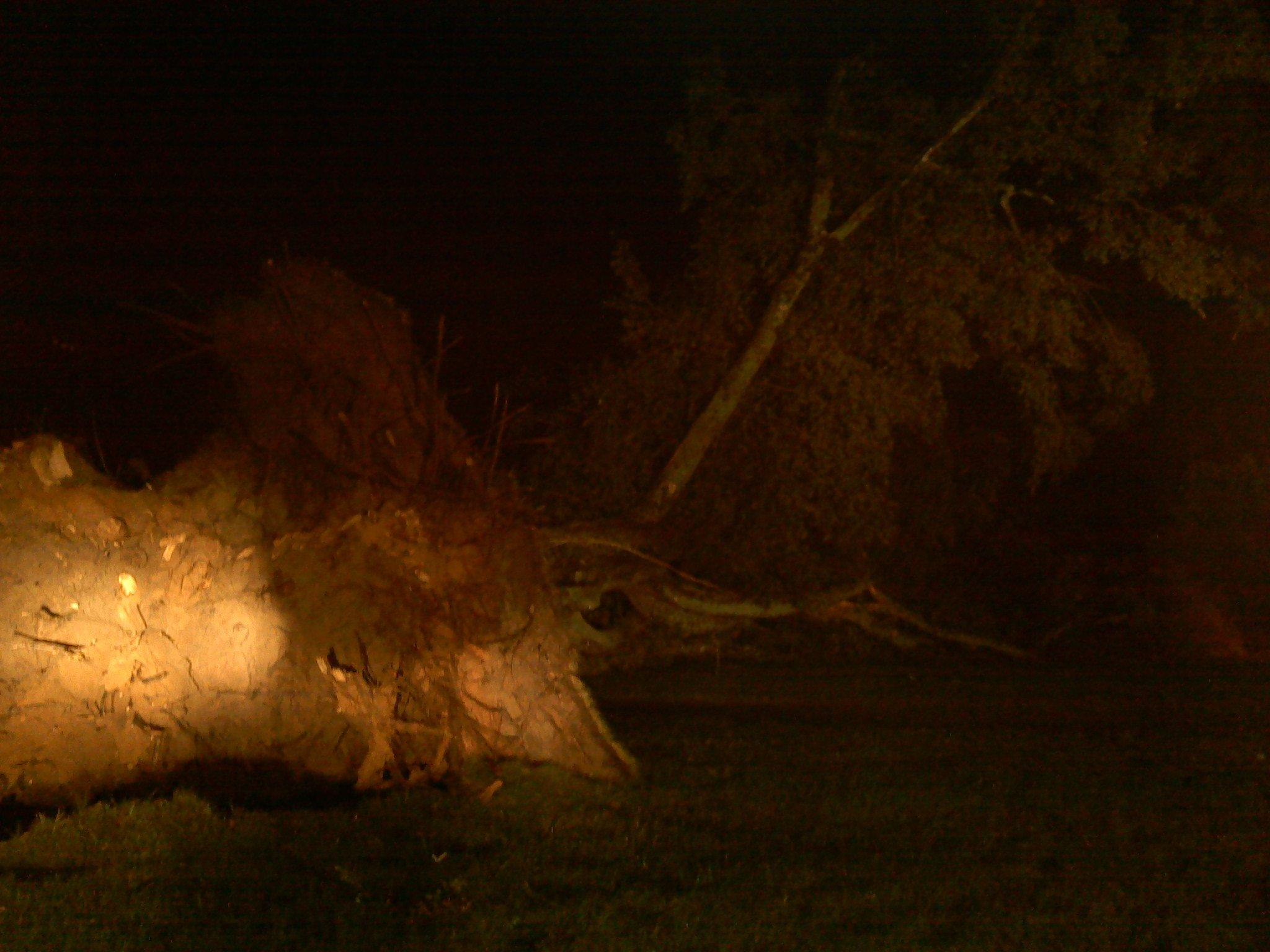 A tree fell at First Baptist Church in Belton. Photo by Mark Warren/FOX Carolina.
