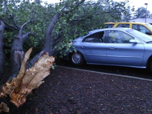 A tree fell on Miracle Mile Drive in Anderson County. Photo by FOX Carolina.