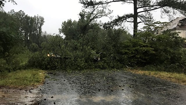 Tree down on Teague Road in Laurens County. (10/8/17 FOX Carolina)