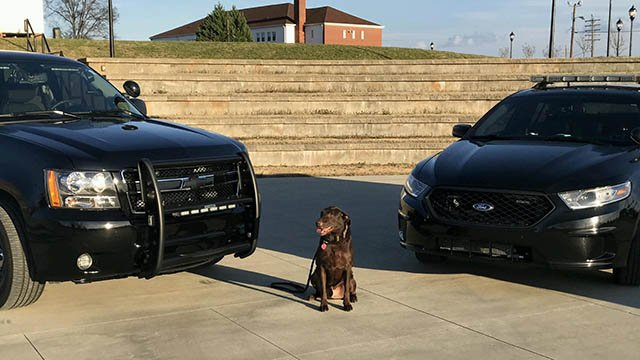 K-9 Bosco (Source: Lyman PD)