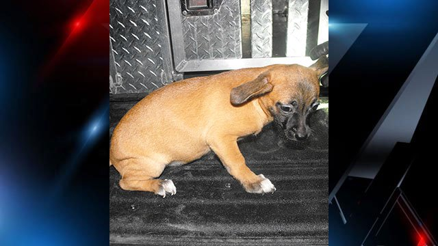 24 dogs and one cat were rescued from the home. (Source: HCSO).