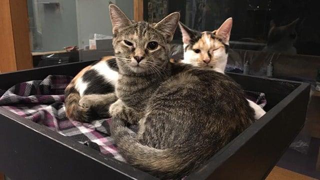 Cat Cafe. (Credit: Jennifer Bronzel)