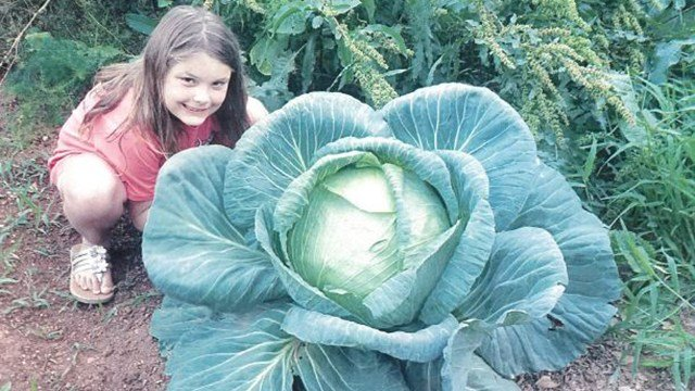 Emma Sheehan and her 17-pound cabbage (Source: Greenville Co. Schools)