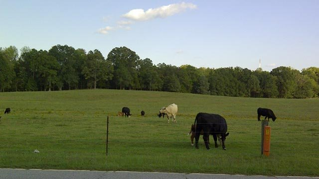 Lazy K Farms in Woodruff, SC. (Sept. 29, 2011/FOX Carolina)