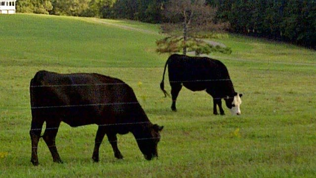 Lazy K Farms in Woodruff, SC. (Sept. 29, 2011/FOX Carolina)