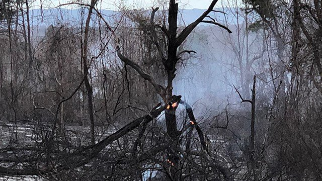 Easley brush fire (Source: Scott Sexton)