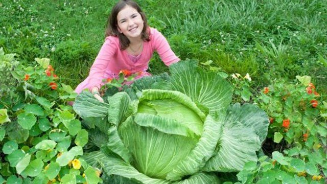 Emily Prince with her 32-pound cabbage (Source: Green Earth Media Group)