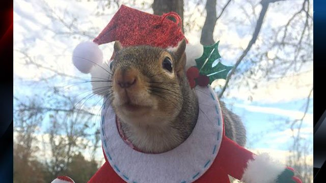 Theodora the squirrel (Source: Kristy Vassey)