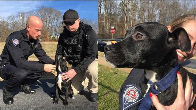 The dog warmed up to the officers quickly. (Source: Greenville Police Department).