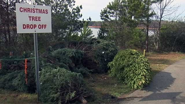 Trees dropped off at Twin Lakes boat ramp in Pickens County. (Dec. 26, 2011/FOX Carolina)