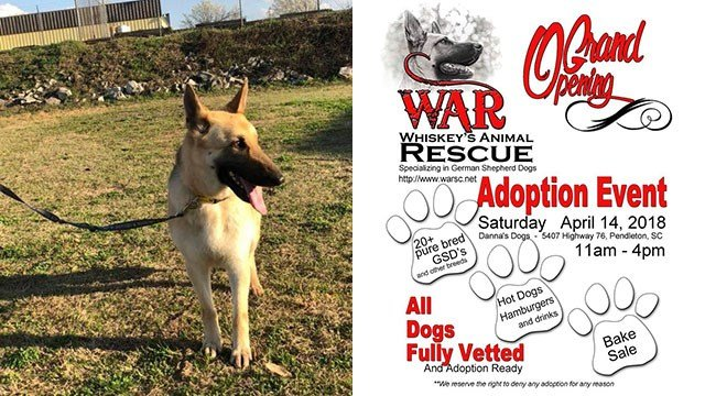 War Whiskey's Animal Rescue hosts Saturday adoption event (Source: War Whiskey's Animal Rescue)