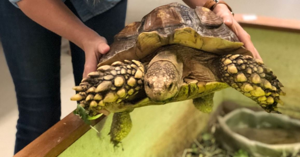 Imhotep, the SCC tortoise is missing (Source: Spartanburg Science Center)