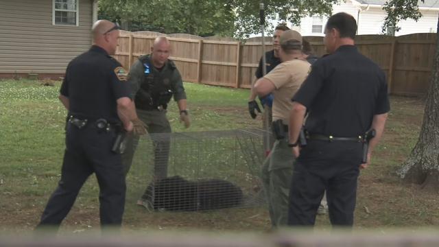 SC DNR relocates bear in Boiling Springs neighborhood (May 22, 2018/FOX Carolina)