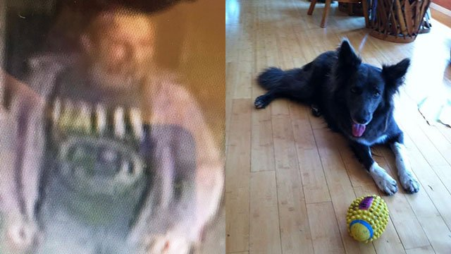 Deputies seek suspect they say stole dog in Buncombe Co. (Source: BCSO)