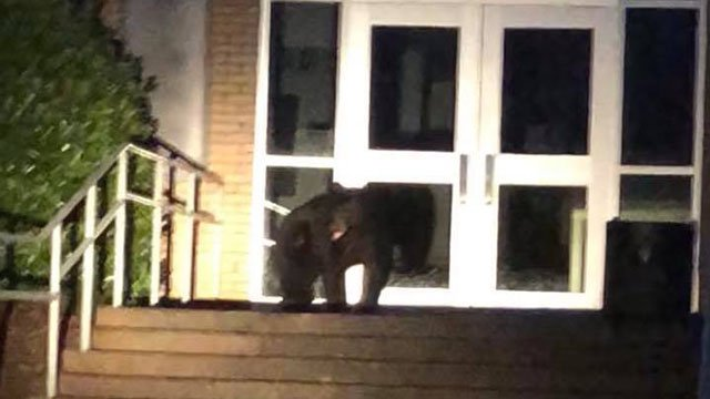 Police say visitor seeks bear necessities at Spartanburg High School (Source: Spartanburg PD)
