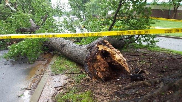 Tree down in Greenville County (FOX Carolina/ 6/1/18)