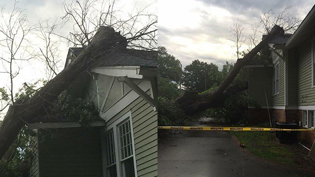 Tree falls onto home on Greenville Street. (Credit: Bethany B.)
