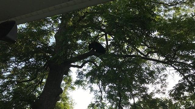 Black bear in Simpsonville. (Source: Homeowner)