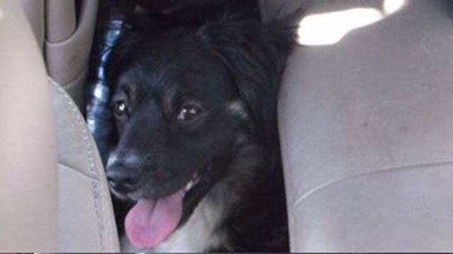 Dog rescued from 133-degree vehicle (Source: Greenville Police Department)