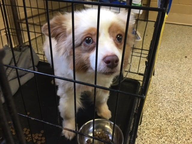 Dog rescued in Clemson (July 5, 2018/FOX Carolina)