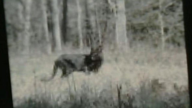 The animal captured on camera in Piedmont some believe is a panther, but experts say is most likely a black coyote. (File/FOX Carolina)