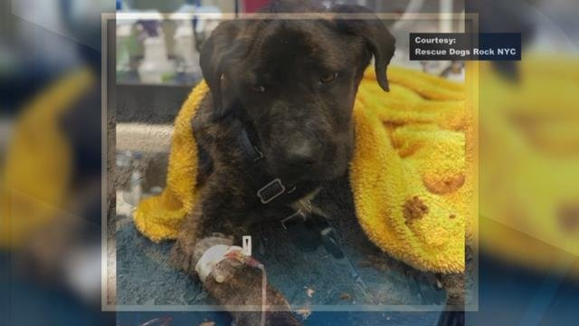 NYC based rescue group helps Laurens Co. dog in need