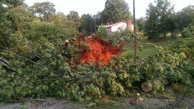 A tree was uprooted as storms moved through Rutherfordton Sunday. (July 1, 2012/FOX Carolina iWitness B. Nelon)
