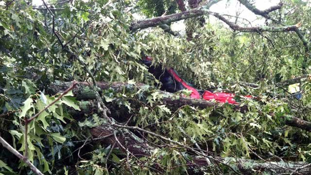 A truck can barely be seen among the limbs of a tree that fell on top of it. (July 10, 2012/FOX Carolina)