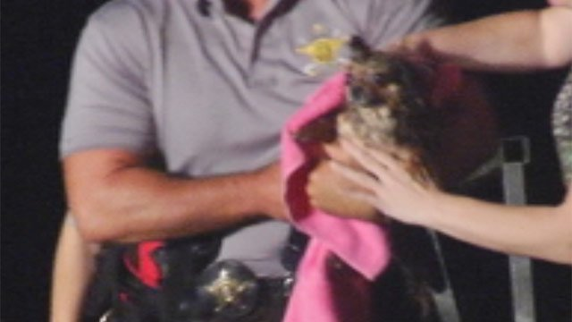The man's Chihuahua is found safe after a search for them. (July 16, 2012/FOX Carolina)