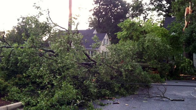 A tree lays on a power line in Spartanburg after a severe thunderstorm. (July 24, 2012/FOX Carolina)