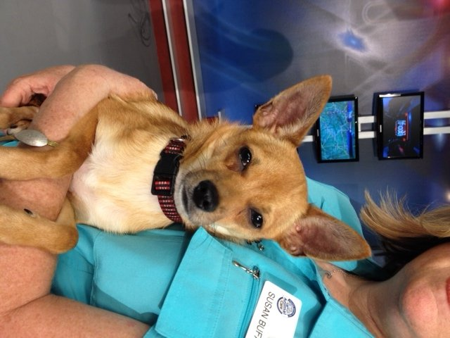 """Tanner"" from Greenville County Animal Care!"