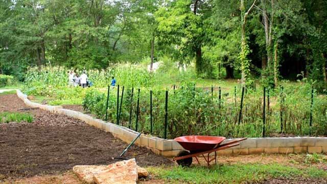 Mill Village Farms' summer garden. (Courtesy Mills Village Farms)