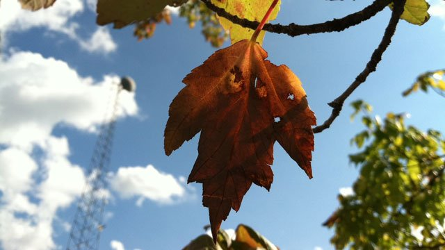 Leaves begin to change on the first day of fall. (File/FOX Carolina)