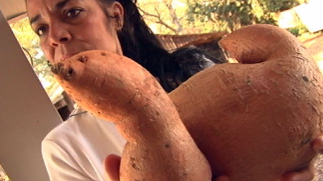 Diana Peterson holds up her eight pound sweet potato, which she says may be the state's largest. (Oct. 24, 2012/FOX Carolina)