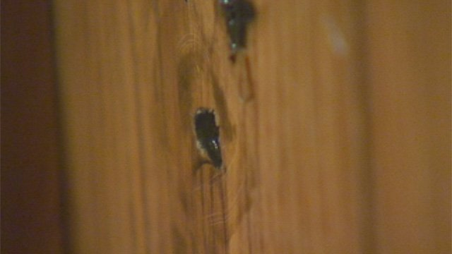 Bullet holes in a wall in the Skyland Drive home in Greer. (Nov. 12, 2012/FOX Carolina)