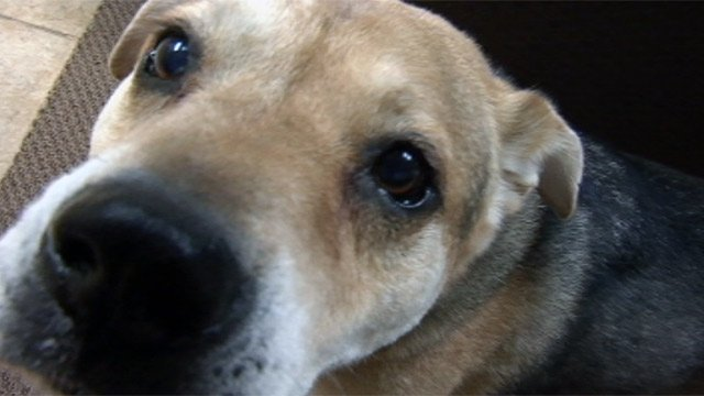 One of Ann Allums' dogs who she has trained to not bark. (File/FOX Carolina)
