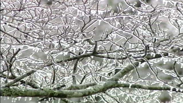 Ice coats the limbs of a tree in Greenville after a winter storm. (Dec. 2005/FOX Carolina)