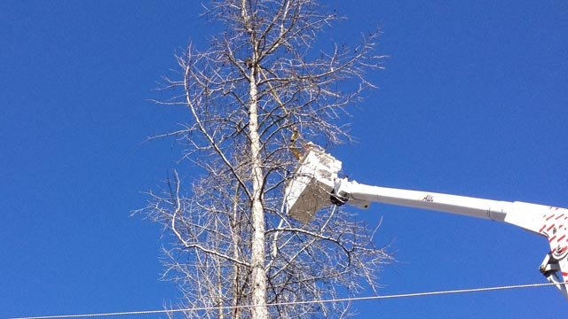 Blue Ridge Electric workers rescue the cat stuck atop a Travelers Rest woman's tree. (Feb. 5, 2013/FOX Carolina)