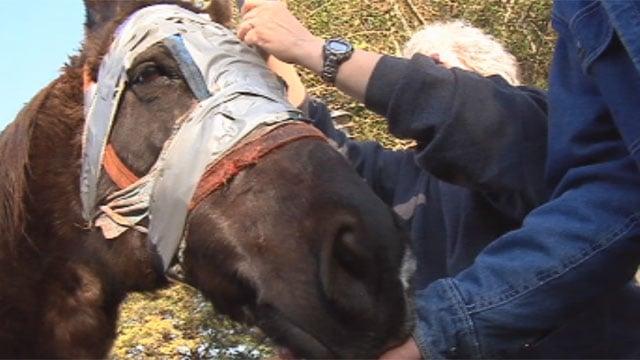 Jan Hudson checks on Smoky Joe's bandages. (Feb. 19, 2013/FOX Carolina)