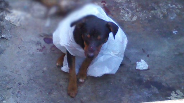 """Bryson"" is seen in a dumpster after he freed himself from the trash bag. (Source: Dawn Todd/Noah's Ark Companion Animal Hospital)"