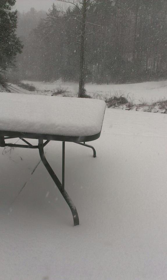 this photo was taken by David Gosnell  and shows heavy snow falling this morning in Spring, Creek, NC (Madison Co.)